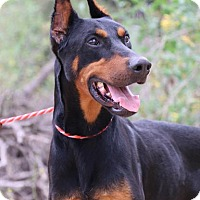 Adopt A Pet :: Ryker - Fillmore, CA