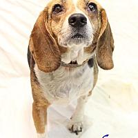 Adopt A Pet :: Arthur - Bradenton, FL