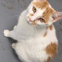 Adopt A Pet :: Knick Knack - Chambersburg, PA