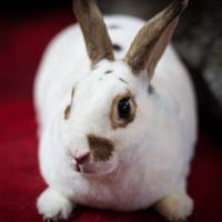 Adopt A Pet :: Sophie - Kansas City, MO