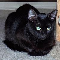 Adopt A Pet :: KitKat - Grants Pass, OR