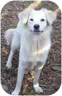 Retriever (Unknown Type)/Shepherd (Unknown Type) Mix Dog for adoption in Proctorville, Ohio, Ohio - Snowflake