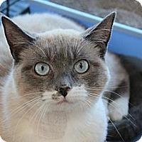 Adopt A Pet :: Lauren - Santa Monica, CA