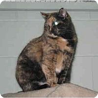 Adopt A Pet :: Confetti - Mission, BC