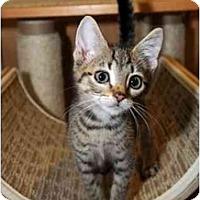 Adopt A Pet :: Tony - Farmingdale, NY