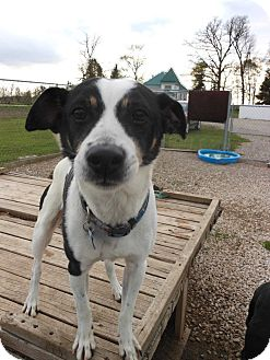 Jack Russell Terrier Mix Dog for adoption in Grinnell, Iowa - Tucker