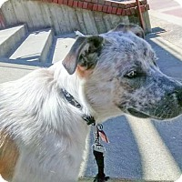 Adopt A Pet :: Inu URGENT needs home now - Sacramento, CA