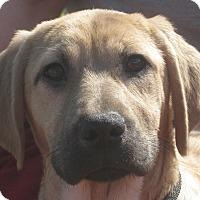 Adopt A Pet :: Katherine Hepburn - Portland, ME