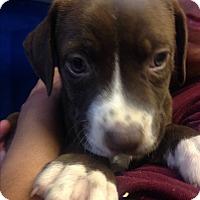 Adopt A Pet :: DANA'S BOY - Pompton Lakes, NJ