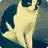 Adopt A Pet :: Zara - McDonough, GA