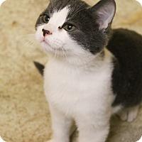 Adopt A Pet :: Tickle - McDonough, GA