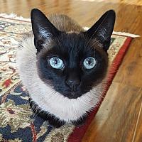 Adopt A Pet :: Mooshu - El Dorado Hills, CA