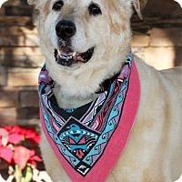 Adopt A Pet :: Sadie (PLACED) Adoption_Pending - Glendale, AZ