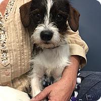 Adopt A Pet :: Jackson - Rancho Palos Verdes, CA