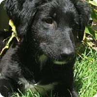 Adopt A Pet :: Ruby Rose - Torrance, CA