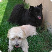 Adopt A Pet :: OLIVER AND SWEETPEA - Dublin, OH