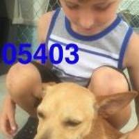 Adopt A Pet :: GIZMO - Kiln, MS