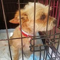 Adopt A Pet :: Sophie - Spring, TX