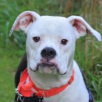 Adopt A Pet :: Emilia - Mentor, OH