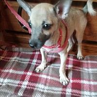 Adopt A Pet :: Tanner - Crawfordville, FL