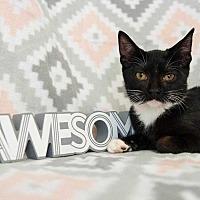 Adopt A Pet :: Diego III - Muskegon, MI