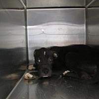 Adopt A Pet :: Bison - Weatherford, TX