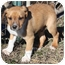 Photo 4 - Terrier (Unknown Type, Medium) Mix Puppy for adoption in kennebunkport, Maine - Andy - PENDING!
