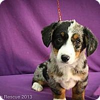 Adopt A Pet :: Powder - Broomfield, CO