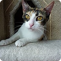 Adopt A Pet :: Bella - Madison, AL