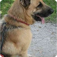 Adopt A Pet :: Henry - Conyers, GA