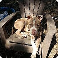 Adopt A Pet :: Auggie - New orleans, LA