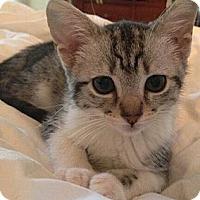 Adopt A Pet :: Flower - Reston, VA