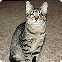 Adopt A Pet :: Tabitha - The Colony, TX