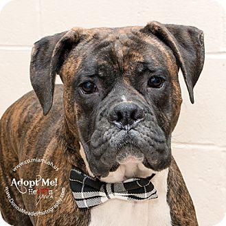 Boxer Mix Dog for adoption in Troy, Ohio - Boscoe