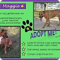 Adopt A Pet :: Maggie - El Campo, TX