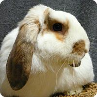 Adopt A Pet :: Jingles - Newport, DE