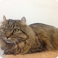 Adopt A Pet :: Gypsy - Newport Beach, CA
