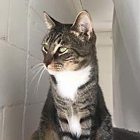 Adopt A Pet :: Panthro - Island Park, NY