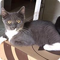Adopt A Pet :: Arya - Spencer, NY