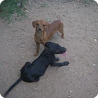 Adopt A Pet :: Cooper - Buchanan Dam, TX