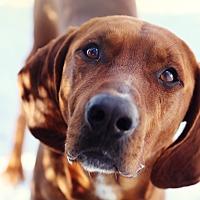 Adopt A Pet :: Hank - Guelph, ON