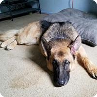 Adopt A Pet :: Cher - Hillside, IL