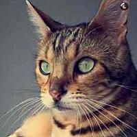 Adopt A Pet :: Cairo - Davis, CA
