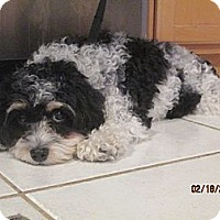 Adopt A Pet :: Missy - Clayton, OH