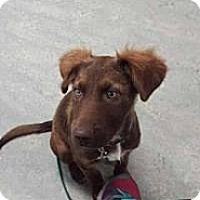 Adopt A Pet :: Bonnie - New Boston, NH