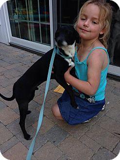 Italian Greyhound Mix Puppy for adoption in North Brunswick, New Jersey - Ducati