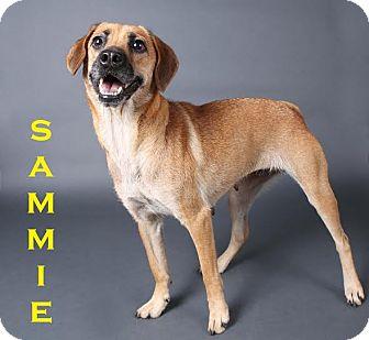 Terrier (Unknown Type, Medium) Mix Dog for adoption in Gainesville, Florida - Sammie