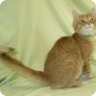 Domestic Mediumhair Cat for adoption in Powell, Ohio - Garby