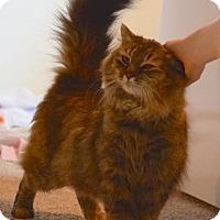 Adopt A Pet :: Elton - Oberlin, OH