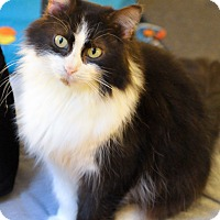 Adopt A Pet :: Mrs Bear - Chicago, IL